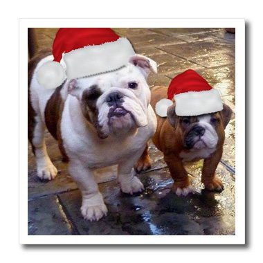 3dRose ht_63087_2 English Bulldog Christmas Wearing Santa Hats-Iron on Heat Transfer Paper for White Material, 6 by 6-Inch