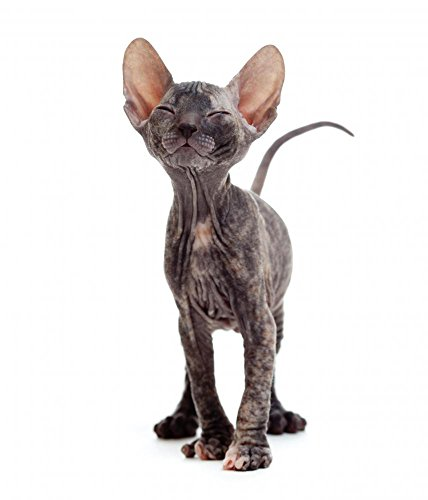 Wallmonkeys Satisfied Hairless Sphynx Kitten Peel and Stick Wall Decals WM48289 (18 in H x 15 in W)